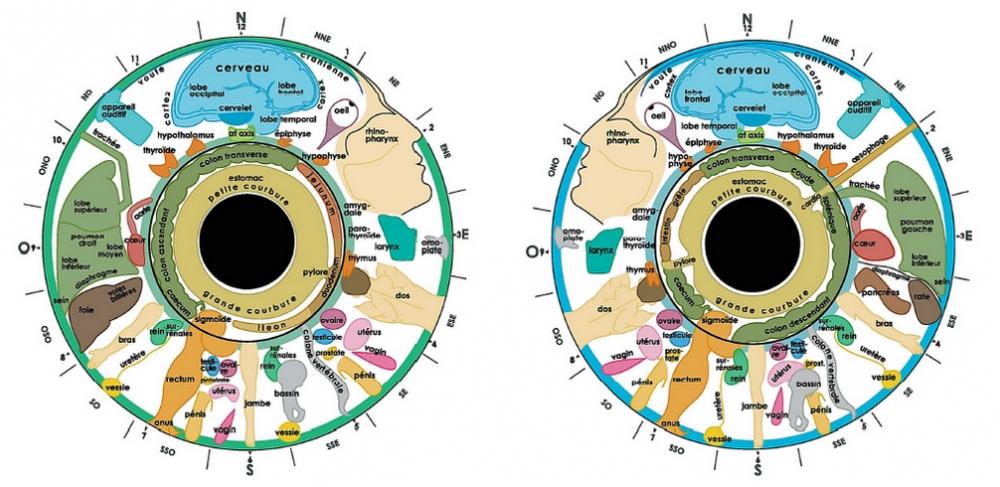 Cartographie iridologie